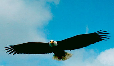 See wildlife like this soaring bald eagle while fishing on a photo safari in Juneau Alaska
