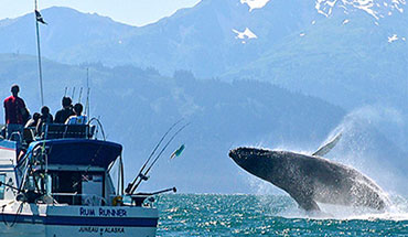 Book your Juneau Whale Watching Tour with Rum Runner Charters