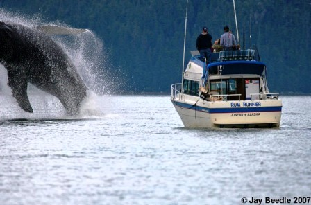 Whale watch in Alaska